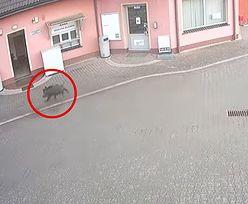 Szalał na stacji paliw pod Wrocławiem. Wszystko uchwycił monitoring