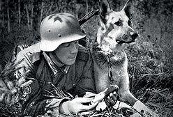 Park jurajski Hitlera. Jakie zwierzęta hodowali naziści?