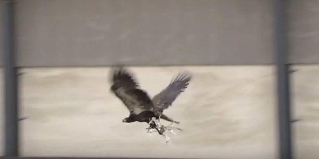 Orły obronią hiszpańską rodzinę królewską przed dronami
