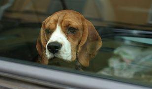 Pamiętajmy o psach w samochodach!