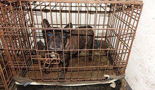 Makabryczna hodowla psów zlikwidowana