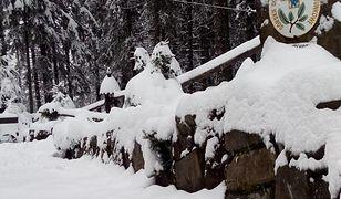 Śląskie. Śnieg w wyższych partiach Beskidów. Bardzo trudne warunki na szlakach