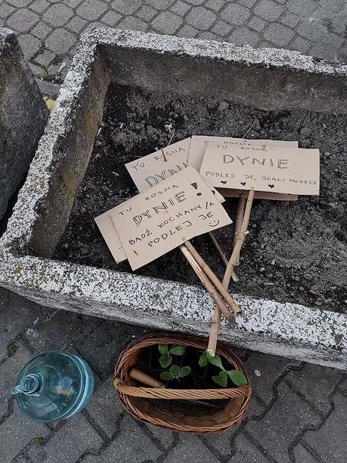 Miejscy aktywiści zachęcają do sadzenia na własną rękę roślin w ulicznych gazonach
