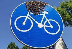 Warszawa. Pszczoły na rowerze. Rój dojechał do pasieki