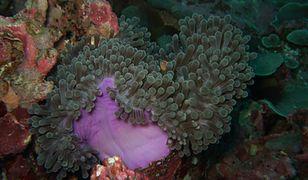 Podwodne muzeum na Karaibach