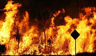 Australia w ogniu. Strażacy pokazali, jak wygląda piekło