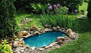 Budowa oczka wodnego w ogrodzie. Najważniejsze zasady