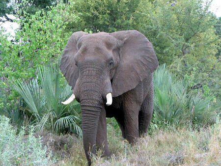Słonie zaatakowały wioskę - zginęło pięć osób