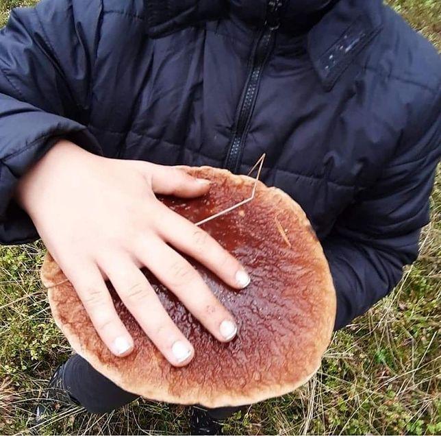 Rekordowe grzybobranie trwa. W lasach prawdziwe giganty!