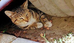 Ranne zwierzę zostało znalezione pod zaparkowanym samochodem