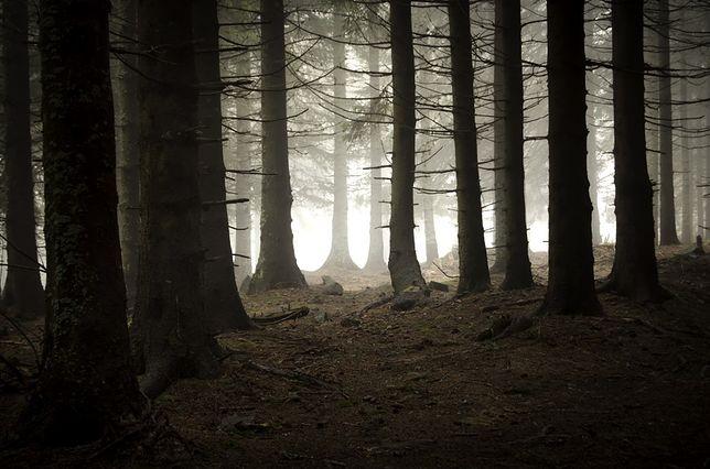 Polskie miejsca grozy - las w Witkowicach, Małopolska