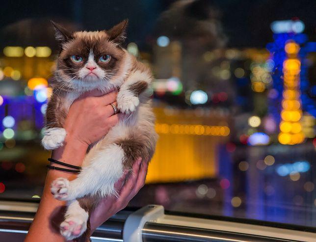 Grumpy Cat nie żyje. Legendarny kot z milionami na koncie miał 7 lat