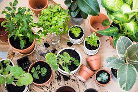 Rośliny, które warto mieć w swojej sypialni