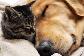 Czym różnią się właściciele kotów i psów?
