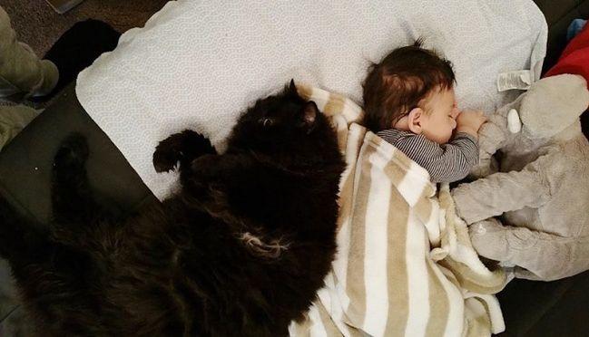 mały Sean i kot Panda