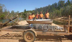 """Australijska """"bestia"""" w końcu schwytana. 600-kilogramowego krokodyla szukano od 2010 roku"""