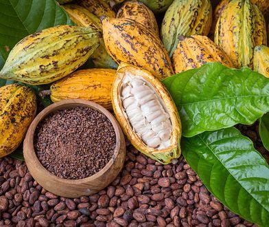 Kakao. Dlaczego warto je włączyć do codziennej diety?