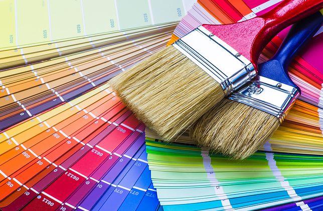 Pędzle przydadzą się w trakcie gruntowania czy nakładania kleju, a także do malowania detali i trudno dostępnych miejsc.