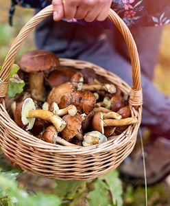 W jakich lasach szukać grzybów? Największy wysyp w Polsce