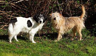 Psy są zwierzętami posiadającymi magnetorecepcję.