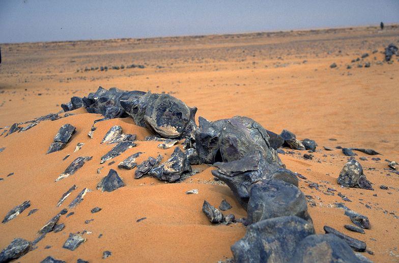 Niezwykłe odkrycie na pustyni. Naukowcy oniemieli