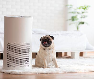 Dzięki nim odetchniesz z ulgą. Urządzenia, które skutecznie poprawią jakość powietrza w twoim domu