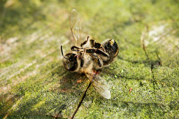 #dziejesienazywo: To nie jest problem, to zagłada. Dlaczego masową giną pszczoły? [WIDEO]
