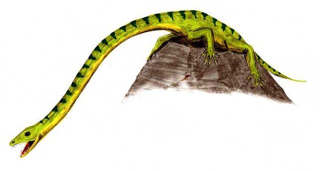 Tanystrof - niezwykły dinozaur z wyjątkowo długą szyją. (Arthur Weasley, CC BY 2.5)