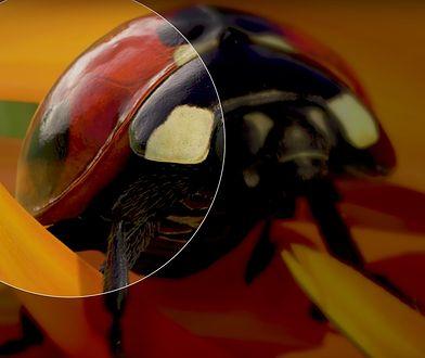 """Kadr z przygotowanej na Xboksa animacji """"Insects"""""""