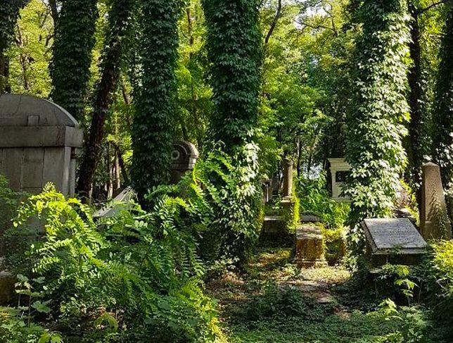 Cmentarz Żydowski w Warszawie. Tu spoczęły we wtorek szczątki odnalezione przy ulicy Miłej w lipcu 2021 roku. To teren dawnego getta