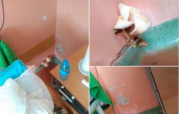 W szpitalu na ścianie wyrosły grzyby