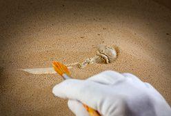 Polscy archeolodzy odkryli kolejne skarby w Risan