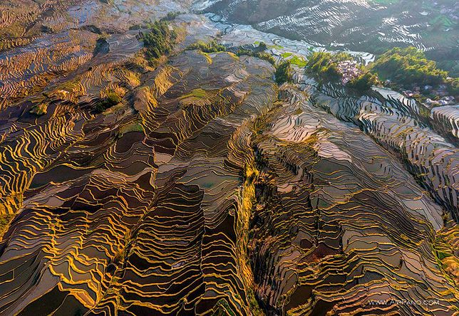 Atrakcje Chin - pola ryżowe