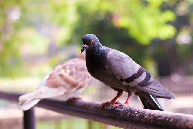 Chińskie drony szpiegujące będą przypominały ptaki