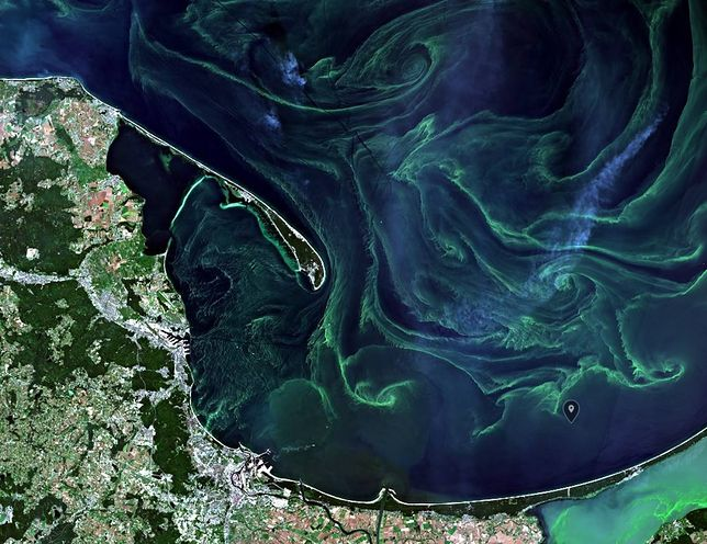 Sinice w Bałtyku stanowią poważne zagrożenie ekologiczne i ekonomiczne