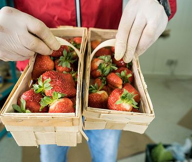 Kilogram truskawek kosztuje do 15 zł, nic więc dziwnego, że zainteresowali się nimi złodzieje