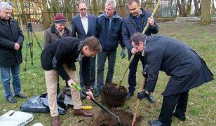 Radny opozycji wyciął swoje drzewa i poszedł protestować przeciw Lex Szyszko