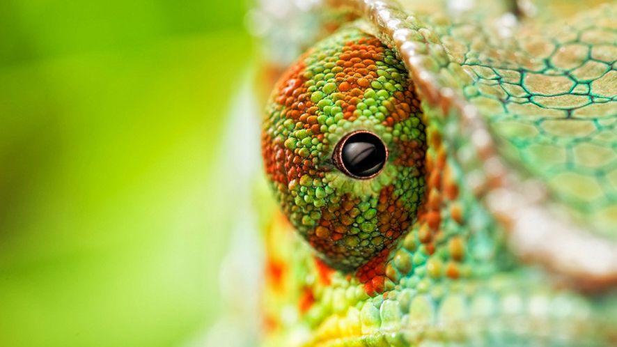 OpenSUSE 13.2 dostępne w wersji beta: system stał się łatwiejszy dla zielonych