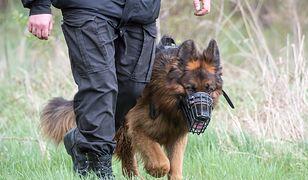 """Pies """"Karmel"""" uratował samobójcę. Odnalazł go w lesie"""