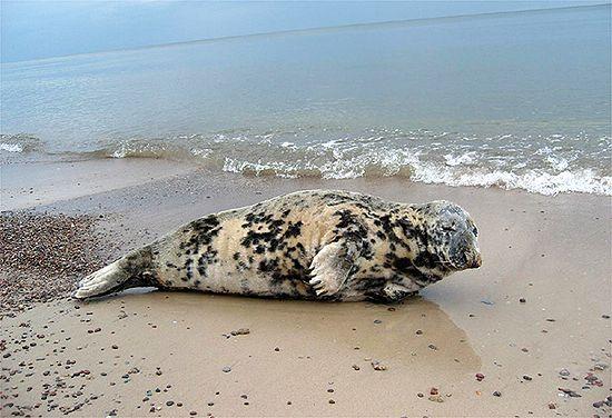 Cudo na polskiej plaży - zdjęcia