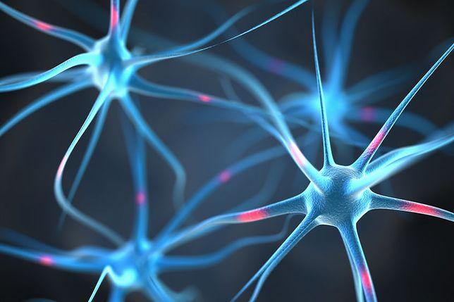Naukowcy ingerują w pracę mózgu. Opracowali urządzenie edytujące ludzkie emocje