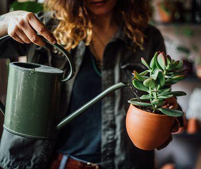 Rośliny do cienia – wybór gatunku i pielęgnacja roślin cieniolubnych