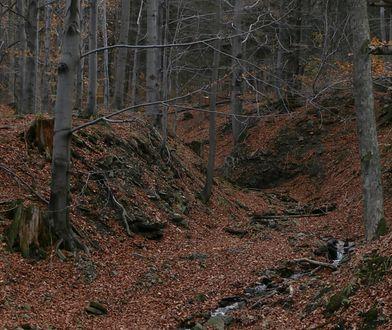 W Beskidach panują dobre warunki do uprawiania pieszych wędrówek.