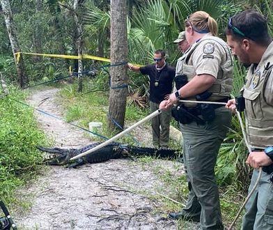 Przerażający wypadek w USA. Wpadł wprost do paszczy aligatora
