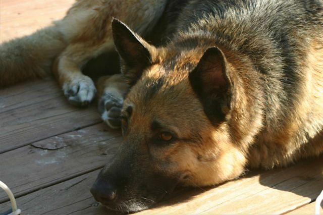 63-latek z Łodzi pobił i zakopał żywcem psa
