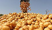 Z ugotowanych ziemniaków można uzyskać więcej prądu
