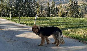 Porzucony pies szuka domu. Straż graniczna postanowiła pomóc
