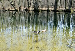 Najciekawsze rezerwaty przyrody w Polsce