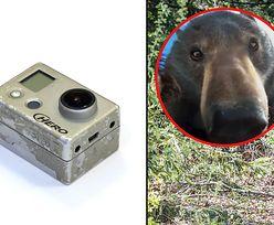 Znalazł zgubione GoPro. Było na nim selfie niedźwiedzia. Oniemiał