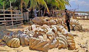 Udaremniono przemyt muszli wartych 25 mln dolarów